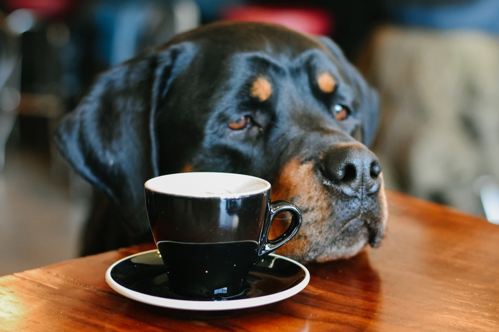 what if your cat or dog drinks coffee