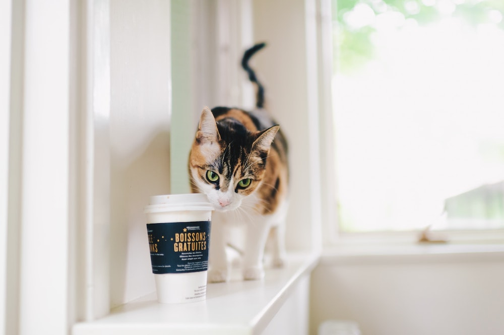 Cat with coffee cup