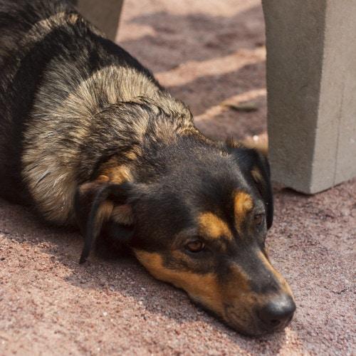 dog lay on the floor