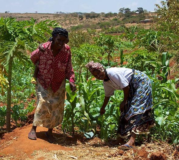 Kenyan coffee farmers