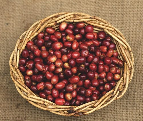 sumatran coffee beans basket