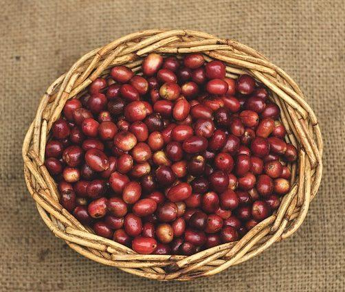 sumatran coffee beans basket