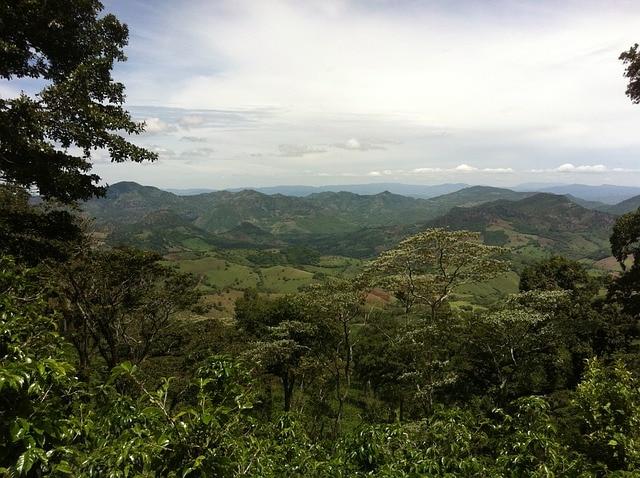 nicaraguan coffee plantation