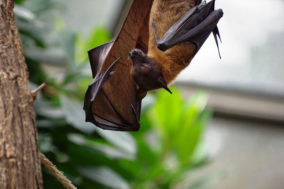 bat poop coffee