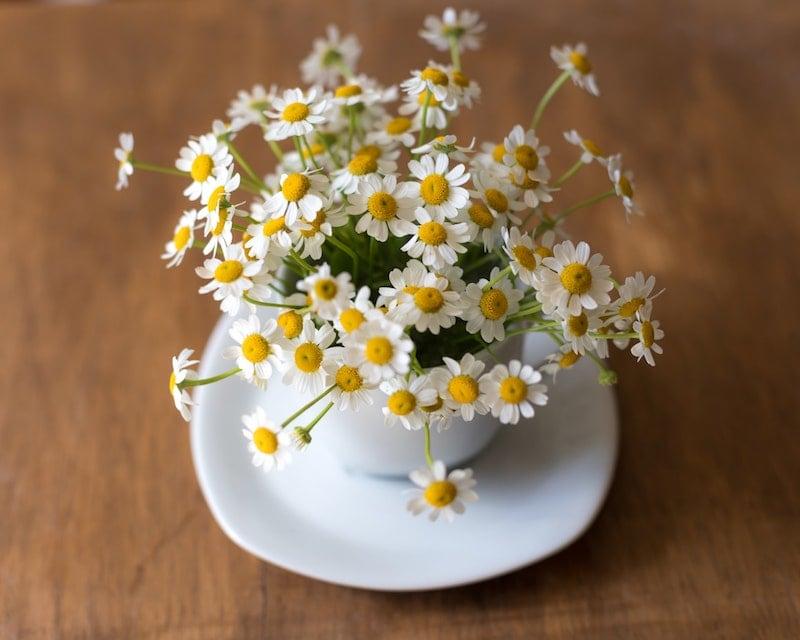 گل های بابونه در یک فنجان چای