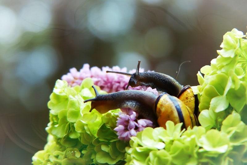 حلزون هایی که گل می خورند