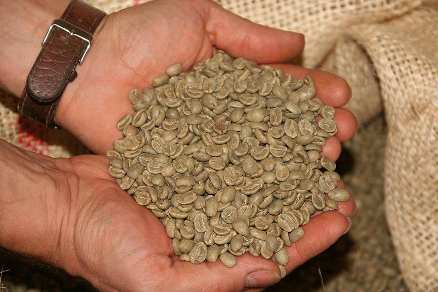 یک مشت دانه های قهوه خام
