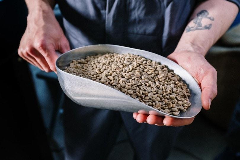مردی که یک قاشق بزرگ دانه قهوه در دست داشت