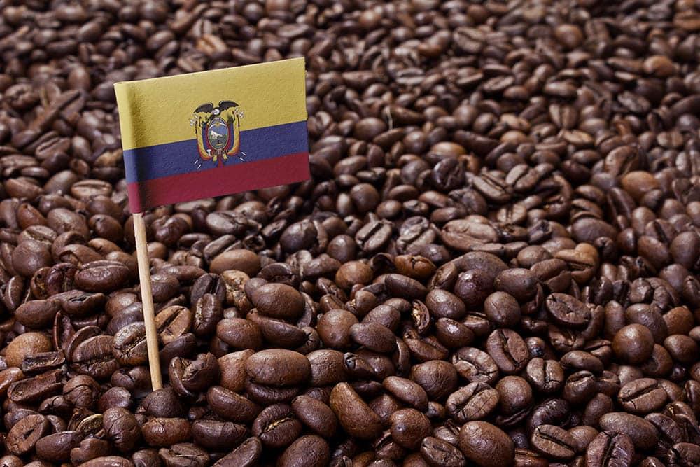 Ecuadorian coffee beans